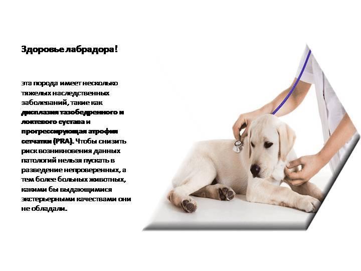 Корм для собак | hill's pet