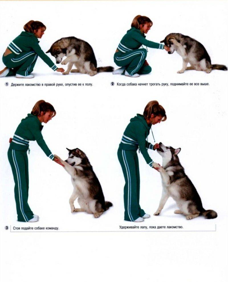 Список команд для собак: обучаем собаку командам