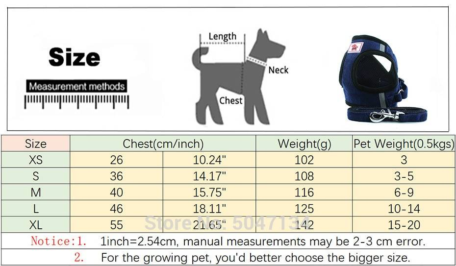 Ошейник или шлейка: что лучше для собак разных пород?