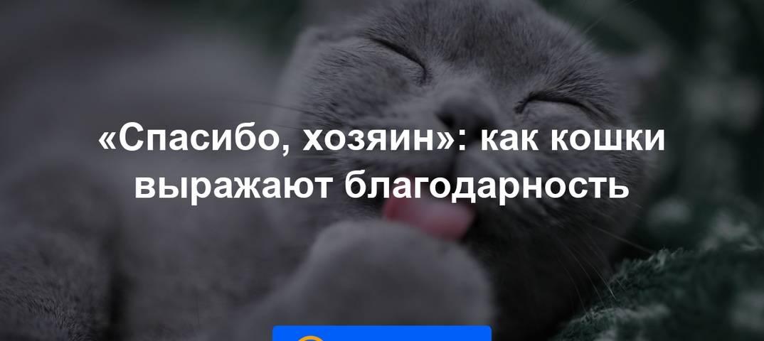 Если вы решили завести кошку