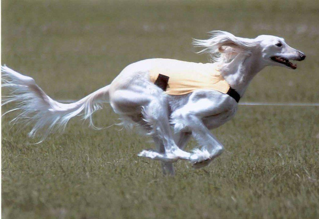 Топ 10 самые быстрые животные в мире