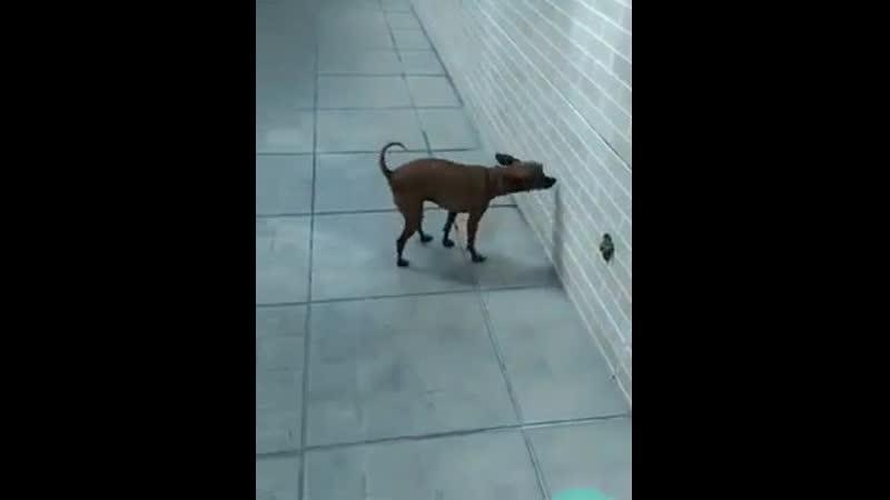 Что делать если у собаки запор - первая помощь
