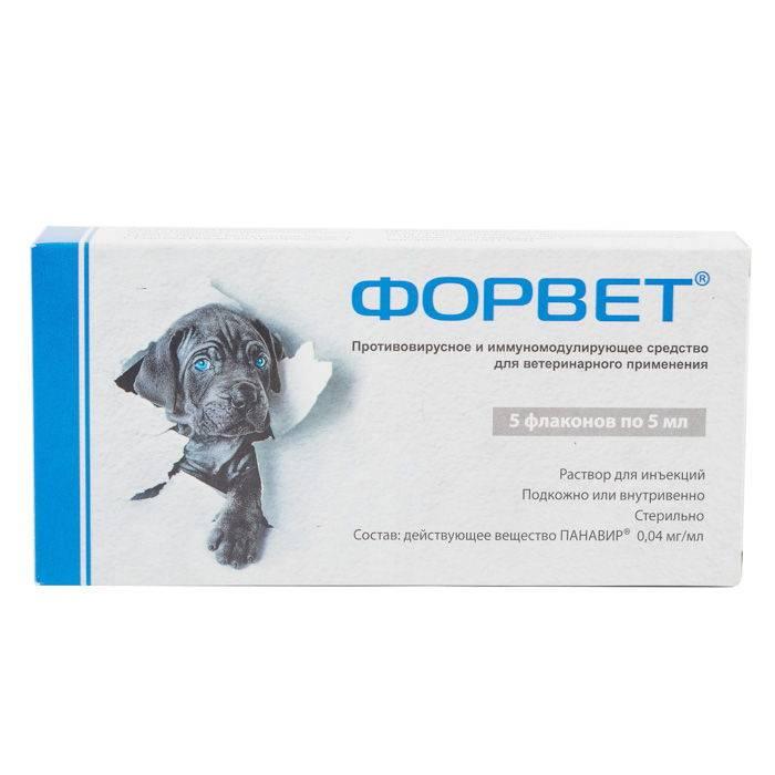 Противовирусный препарат форвет: 10 фактов от ветеринара.