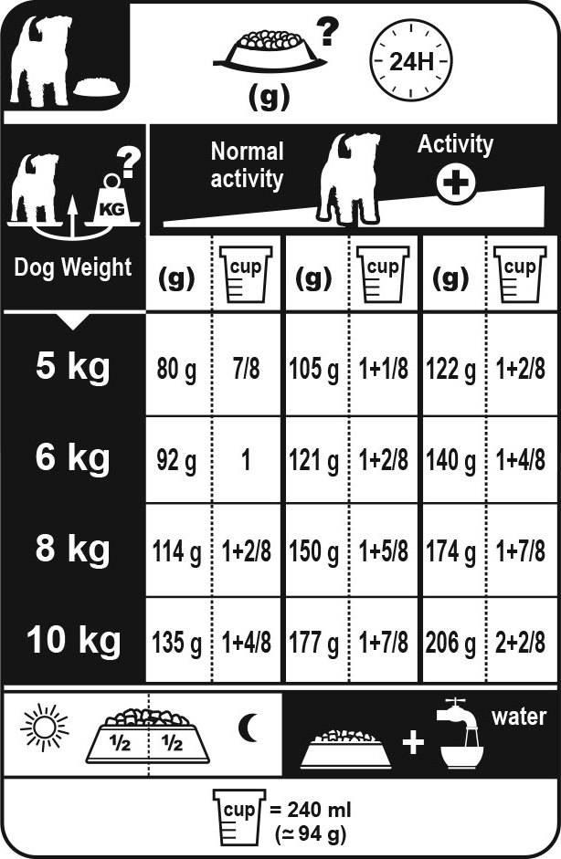 Как ухаживать за джек рассел терьером | собаки мира