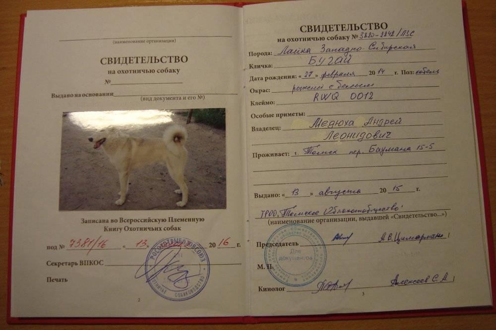 Как сделать документы на собаку: оформление родословной