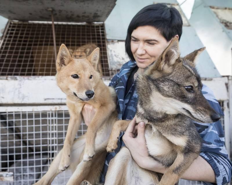 Шалайка, или собака сулимова — новая российская поисковая порода