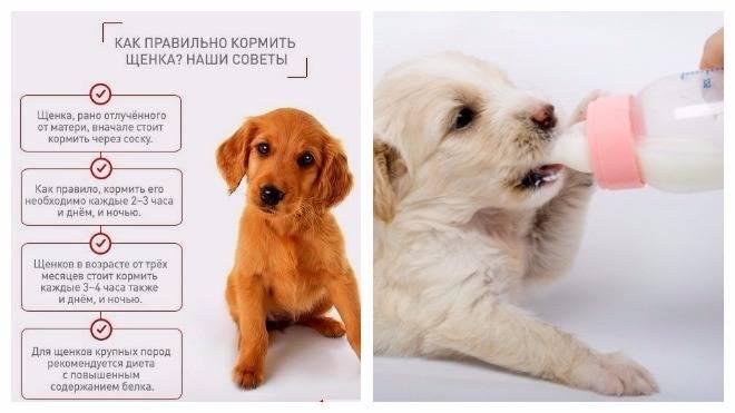 Чем кормить щенка от 1 месяца и до года