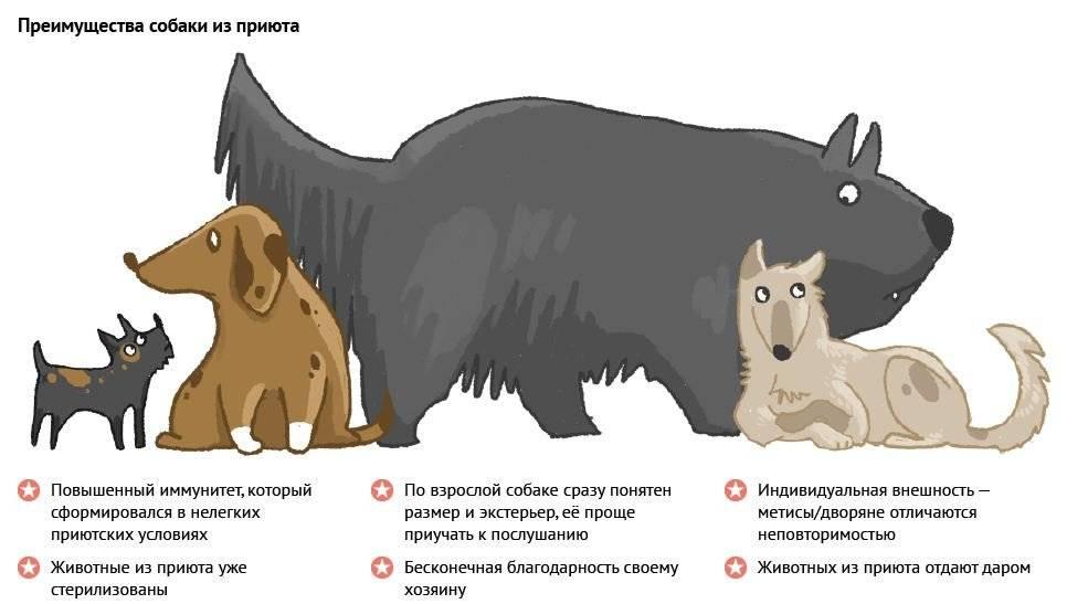 Почему хозяин должен быть «вожаком» для своей собаки - gafki.ru