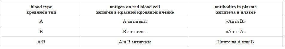 Группы крови человека: чем отличаются и почему их нельзя смешивать