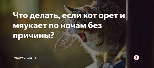 Кот орет без причины по ночам: почему и что делать