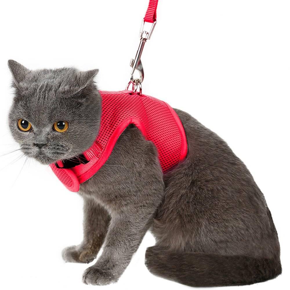 Разновидности шлеек и поводков для кошек: преимущества, недостатки аксессуаров и полезные советы ветеринаров