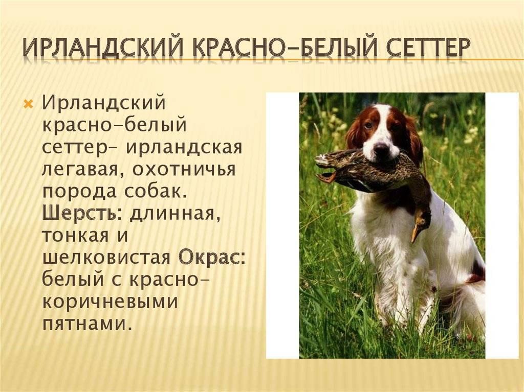 Положение российской кинологической федерации о племенной работе.