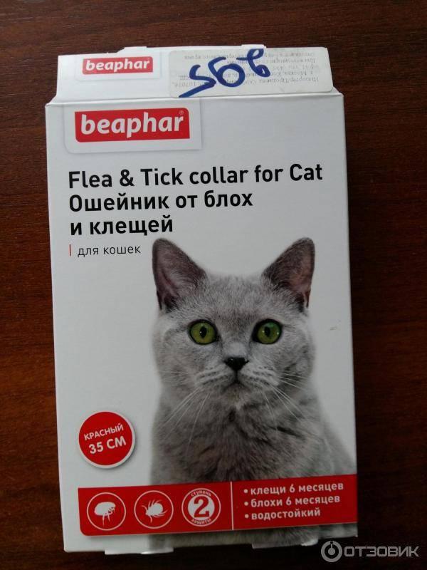 Как действует ошейник от блох и клещей для кошек