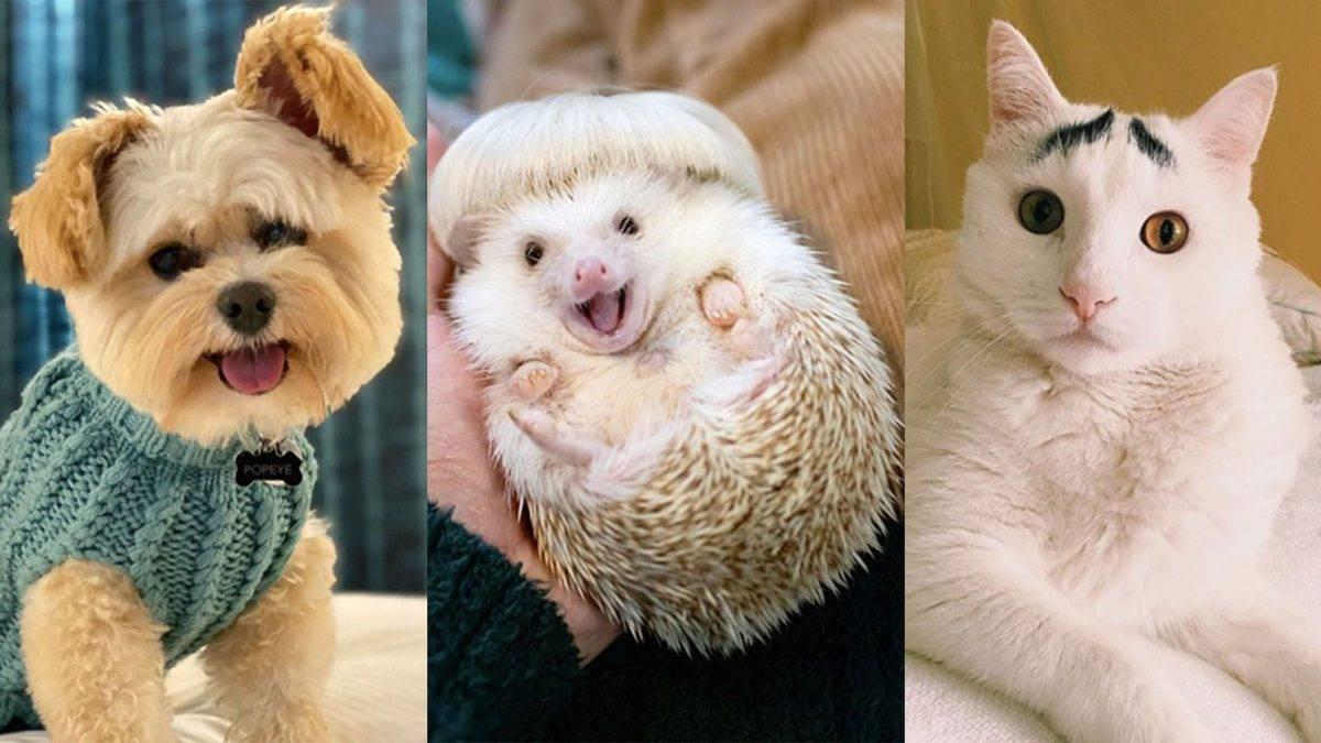 Публичная жизнь домашних животных! топ самых популярных питомцев в instagram