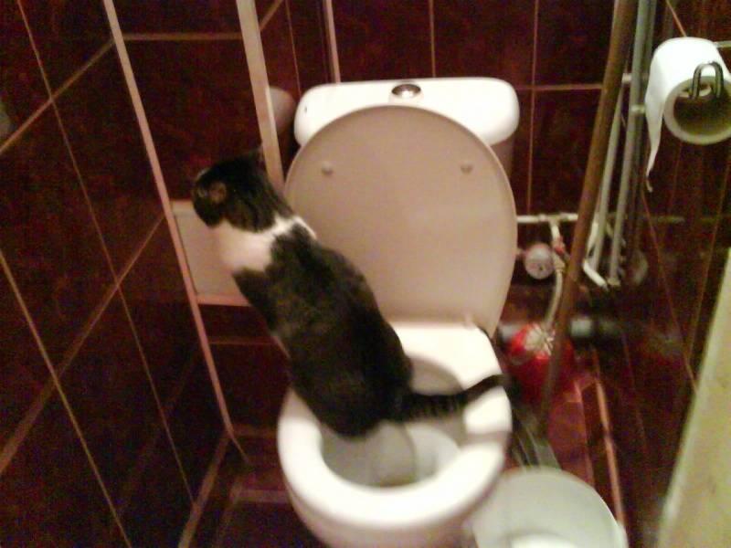 Как часто кот должен ходить в туалет по-большому и по-маленькому?