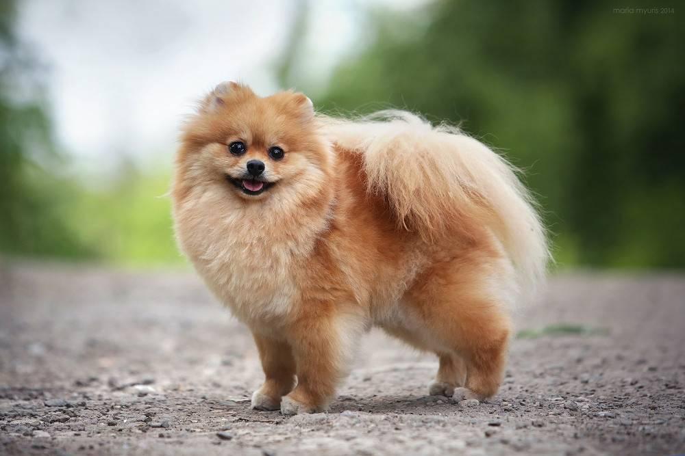 Маленькие собачки: описание пород с фото