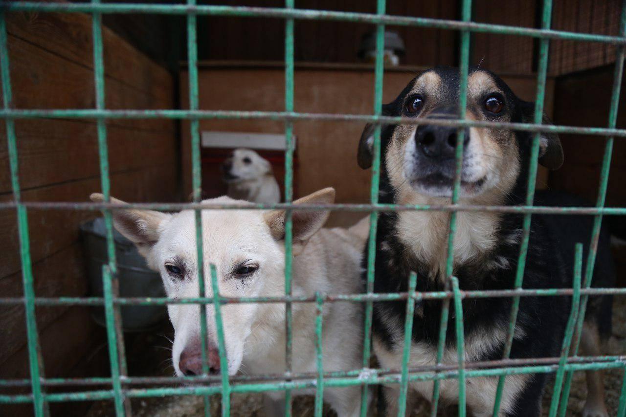 Взять взрослую собаку из приюта | сайт волонтеров приюта для бездомных собак и кошек на ул.зорге в москве