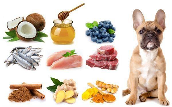 Что нельзя давать собаке: обзор запрещенных продуктов