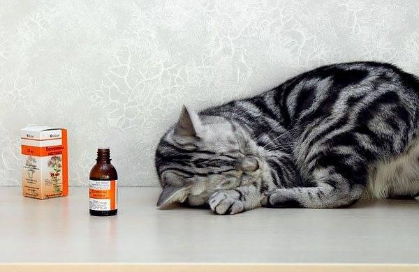 ᐉ что будет если кот съест валерьянку? - zoomanji.ru