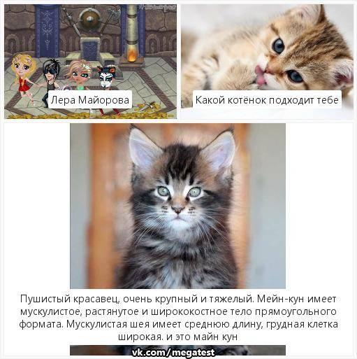 Кого лучше выбрать для дома и квартиры – кота или кошку, кто ласковее и спокойнее?