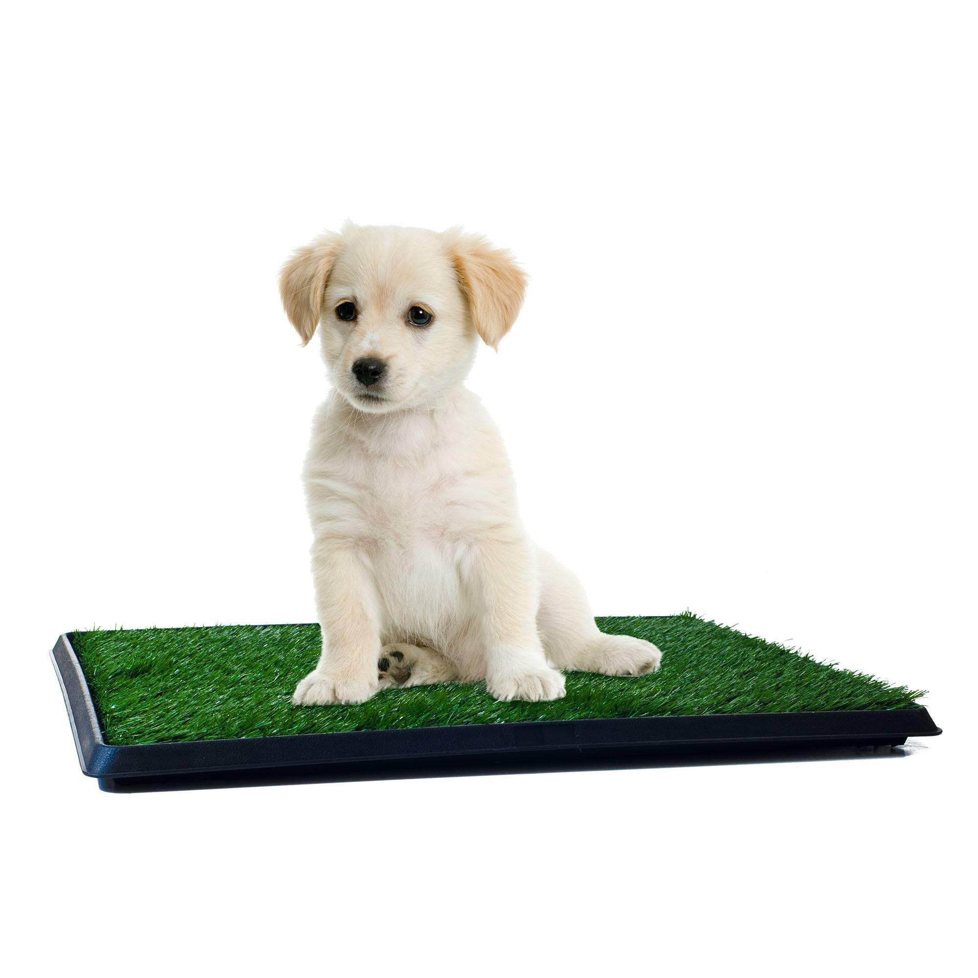 Как приучить щенка ходить в туалет на пеленку или в лоток – jackrussell.pro