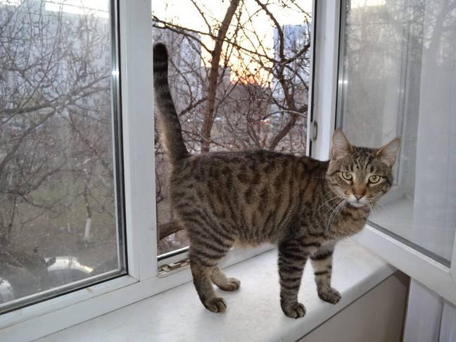 Коты, которые спасли жизнь своим хозяевам