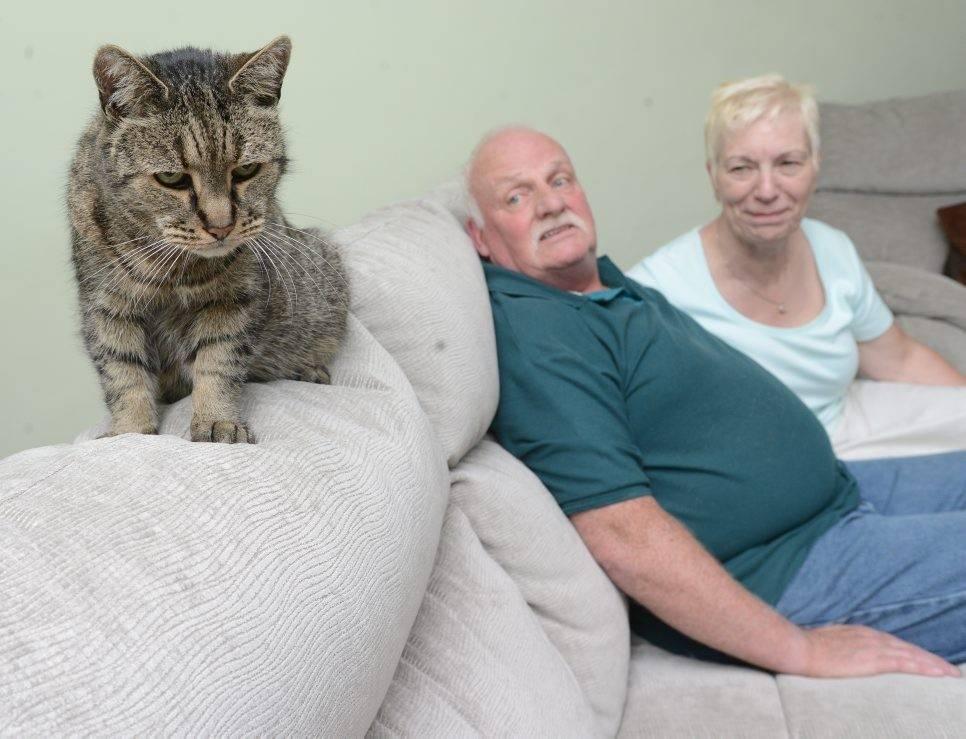 Сколько лет живут кошки и коты:  как продлить им жизнь