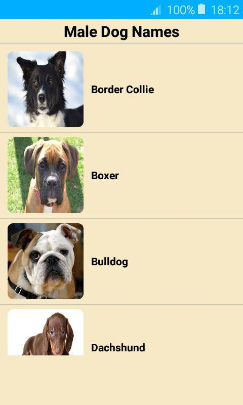 Английские клички для собак: сложные и простые американские имена для мальчиков и девочек с переводом