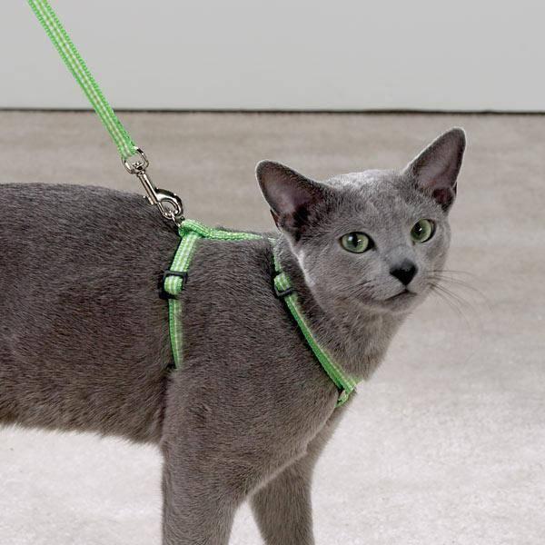 Как надеть шлейку на кошку или кота: пошаговая инструкция видео, как правильно подобрать шлейку