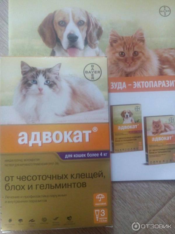 Противоблошиные капли адвокат для котят