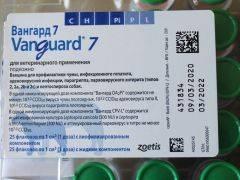 Вакцина вангард 7 (инструкция по применению для собак). зачем собакам делать прививку вангард 7? чем она отличается от других препаратов?