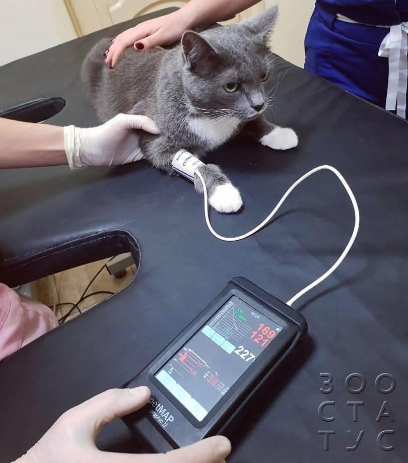 """Болезни сердца у кошек - симптомы и признаки, лечение сердечных заболеваний у кошек в москве. ветеринарная клиника """"зоостатус"""""""