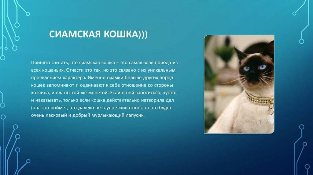 Самые опасные кошки в мире: топ-11 самые опасные кошки в мире: топ-11