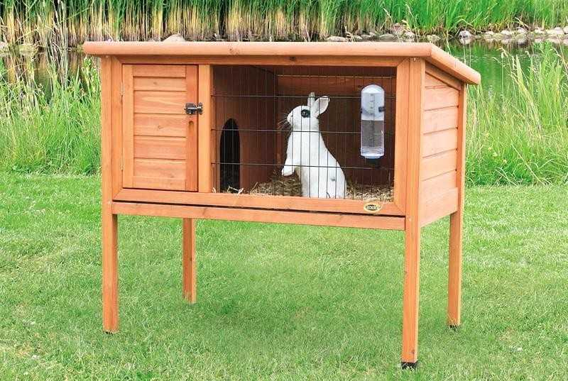 Разведение декоративных кроликов в домашних условиях для начинающих с нуля