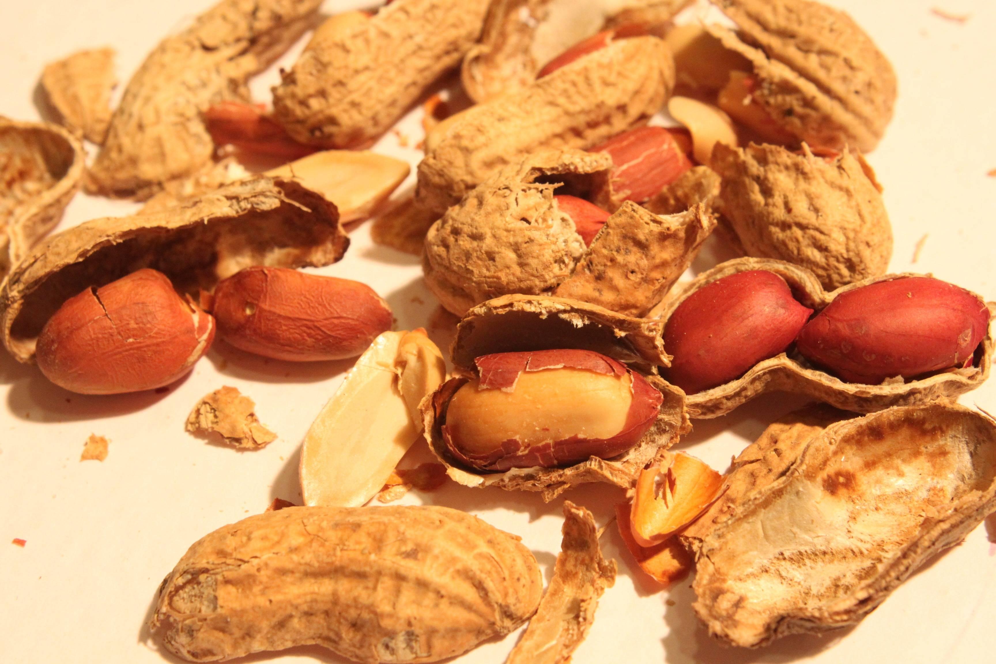 Можно ли собакам давать орехи?