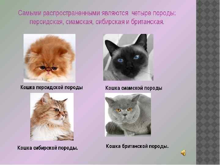 Самые страшные коты в мире: топ-10