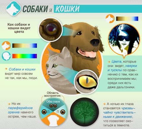 Особенности зрения у кошек: какие цвета различают в окружающем мире