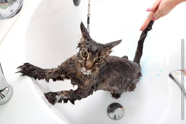 Почему моя кошка сопровождает меня в ванной?