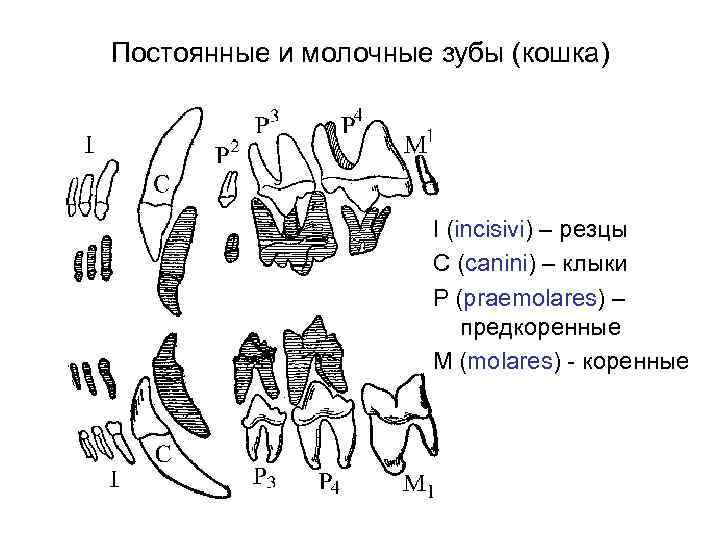 Рентгеновский снимок зубов детям