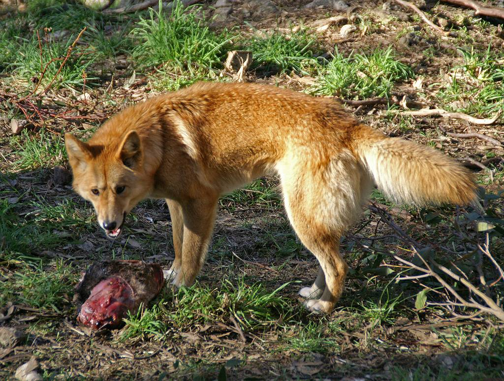 Животные австралии: фото с названиями и описанием
