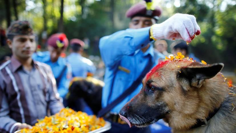 Международный день ветеринарного врача в 2021 году: какого числа отмечают, дата и история праздника