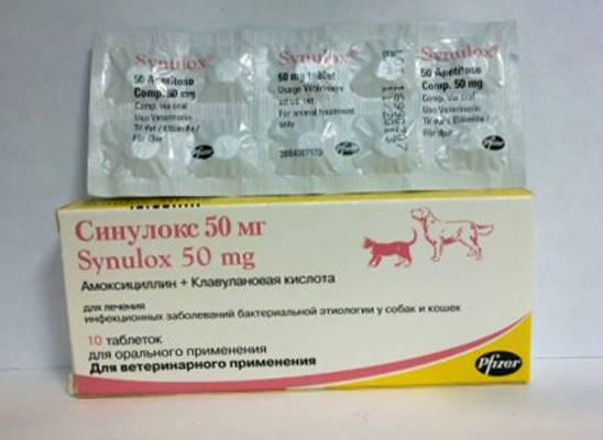 Синулокс для кошек: инструкция по применению лекарства в таблетках и инъекциях по 50 мг и в другой дозировке, аналоги, отзывы