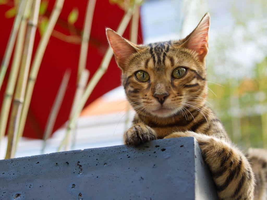 Холецистит у кошек - симптомы и методы лечения