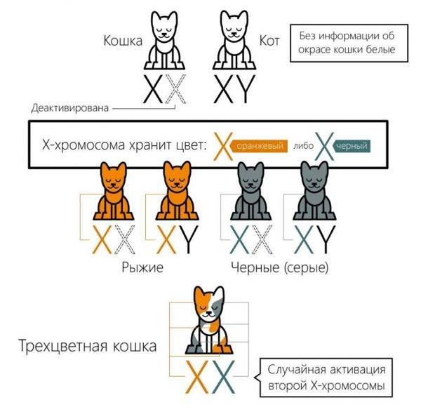 Генетические причины замершей беременности и виды хромосомных мутаций