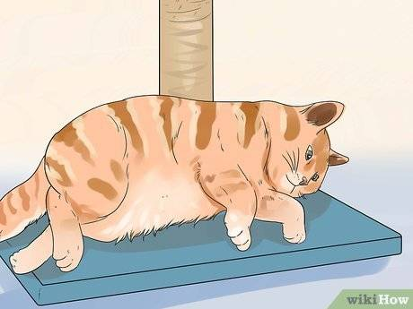 Как отучить кота лазить по столам - самые действенные способы