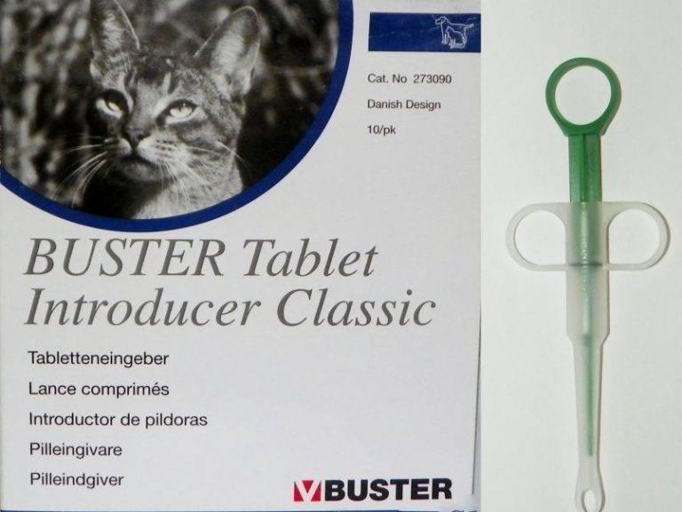 Как дать таблетку кошке   артемида - ветеринарная клиника во владимире с 25-летней историей