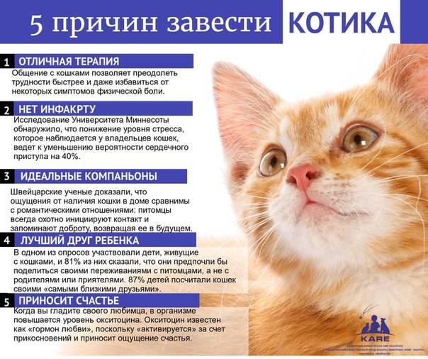 Как подружить двух котов в одном доме