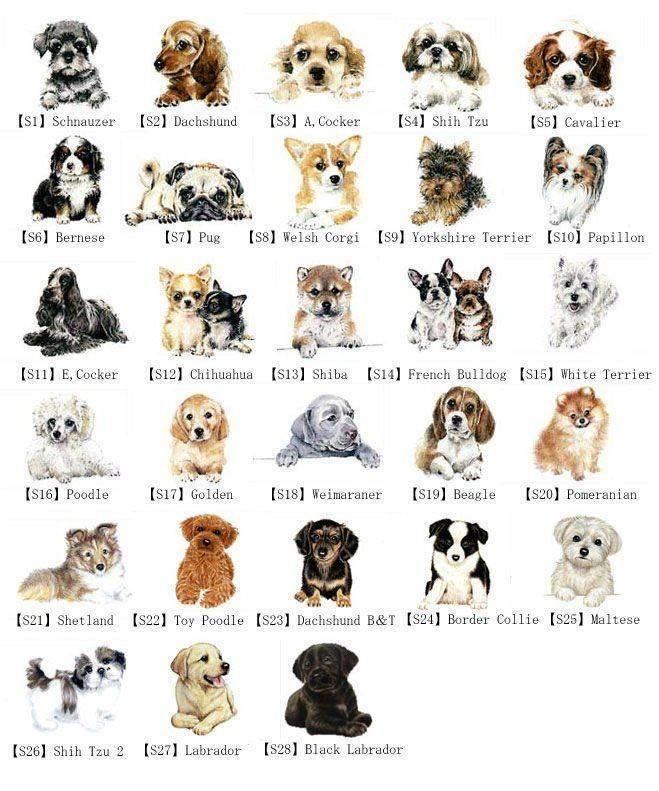 Как назвать собаку мальчика: лучшие клички для животного
