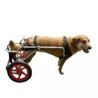 Как выбрать переноску для собак мелких пород и как приучить питомца к нахождению в контейнере, сумке или рюкзаке