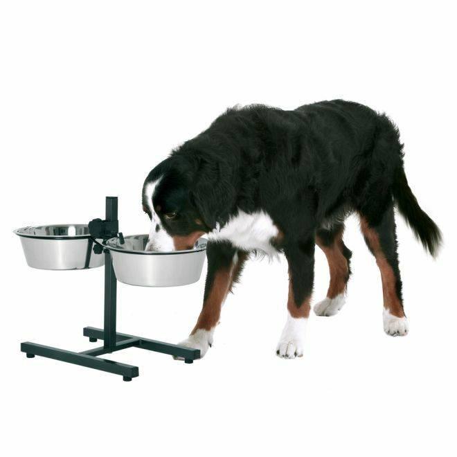 Миски на подставке для собак (19 фото): кормушка на штативе, подставка с двумя мисками и другие виды. правила выбора собачьих мисок для кормления